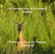 An Introduction to Wisconsin Wildlife cover image