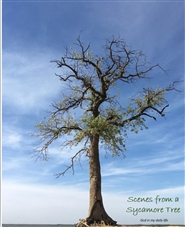 Scenes from a Sycamore Tree cover image