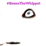 #BeansTheWhippet cover image