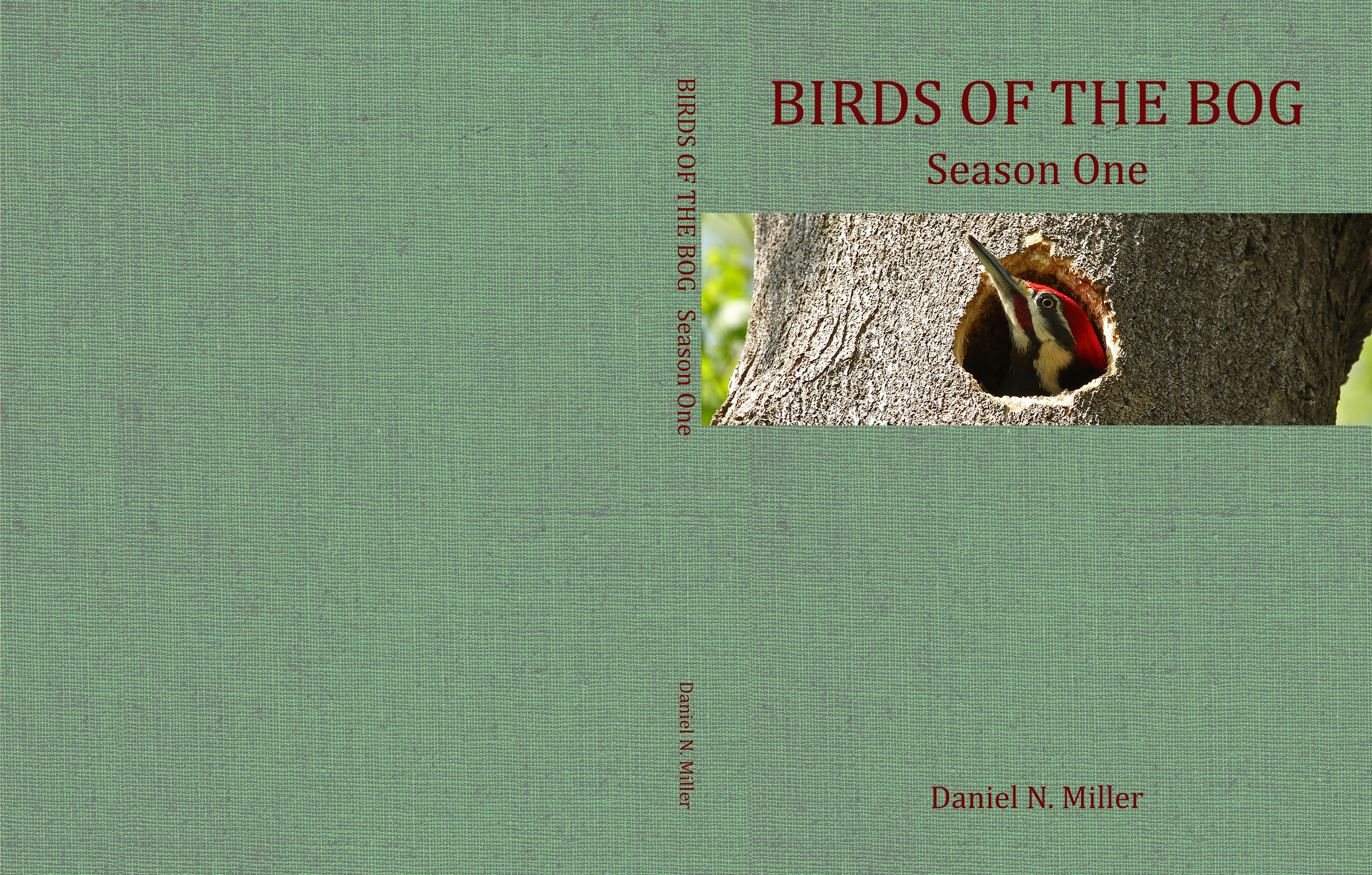 Birds of the Bog Season One cover image