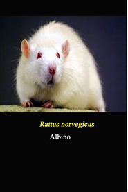 Rat Urinary Acid Phosphatase as an Indicator of Sexual Arousal cover image