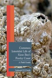 Common Intertidal Life of Kino Bay