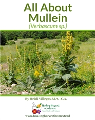 All About Mullein cover image